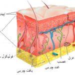 پوست بدن