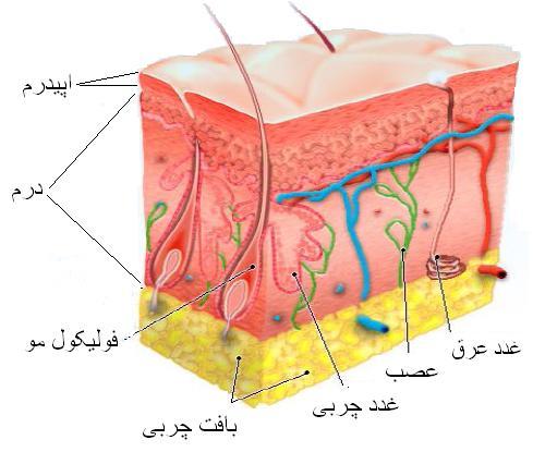 نازک شدن پوست
